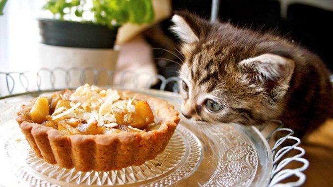 Почему сладкое вредное для кошек