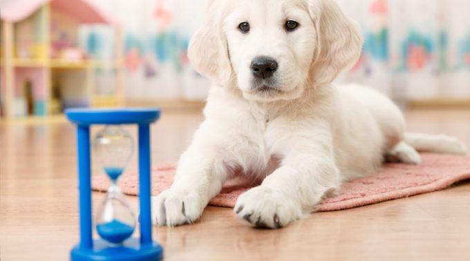 почему собака боится оставаться одна