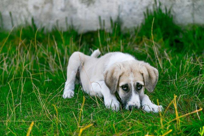 Почему собака дрожит