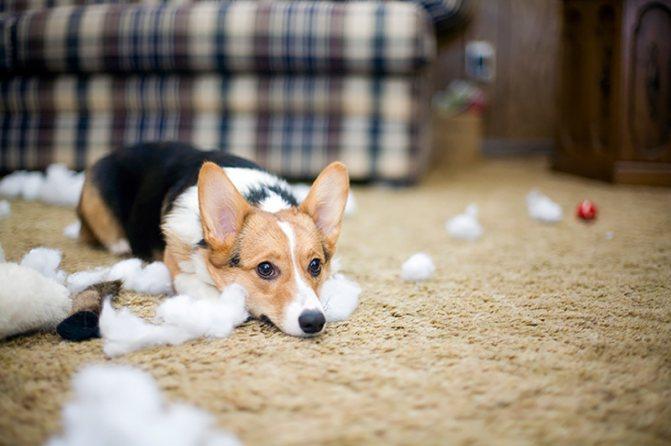 Почему собака линяет сильно и не вовремя