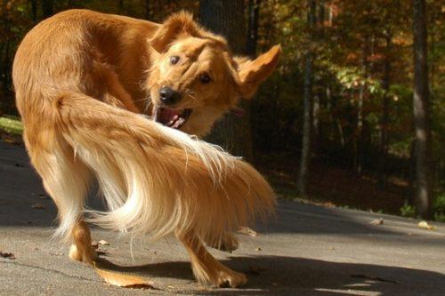 почему собака начала выгрызать свою же шерсть