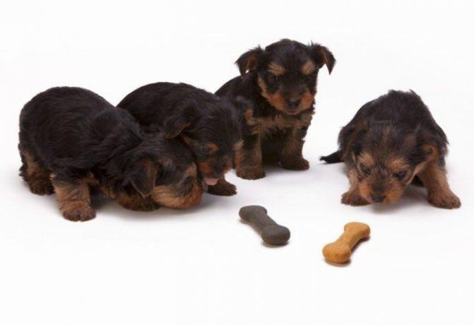 почему собака не ест сухой корм что делать