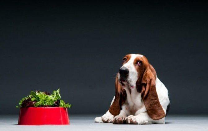 почему собака отказывается есть сухой корм