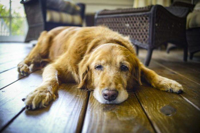 почему собака плохо ест сухой корм