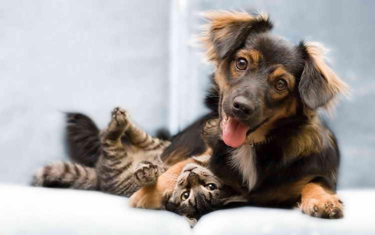 почему собаки не любят домашних кошек