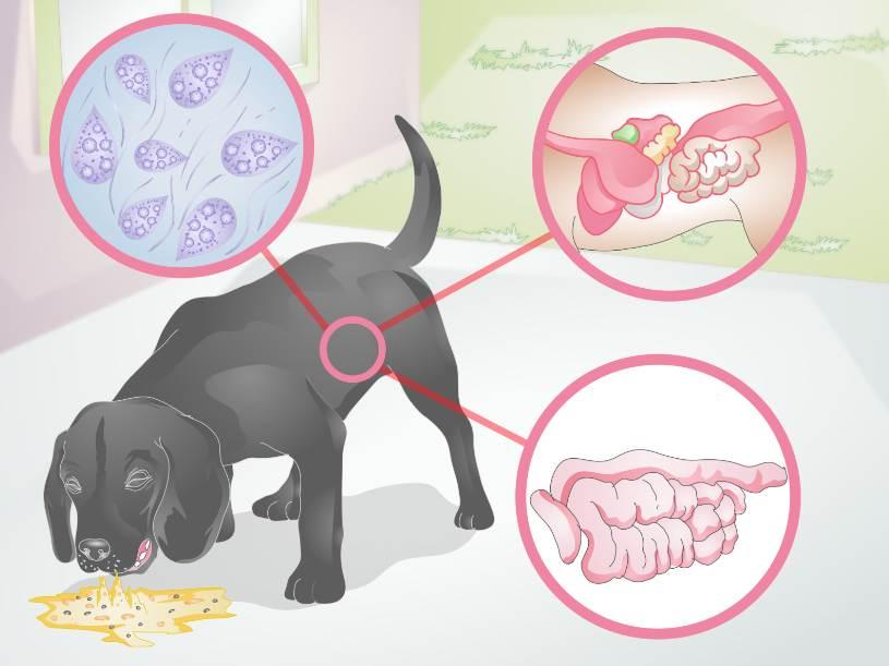 Почему собаку вырывает после еды