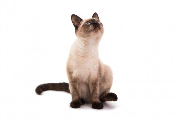 Почему старый кот сильно похудел