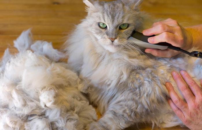 Почему стрижка кошкам при колтунах не рекомендуется