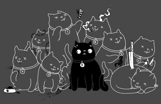 Почему у кошки 9 жизней