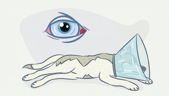 почему у собаки красные глаза