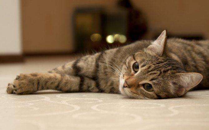 почему уходят коты из дома приметы