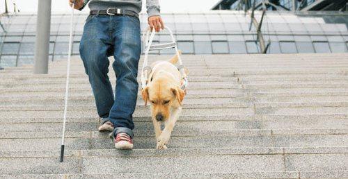 Подготовленная собака