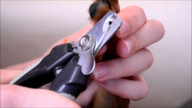 Подстригать когти