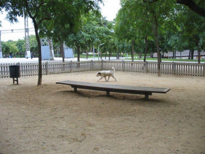 покрытие для вігула собак