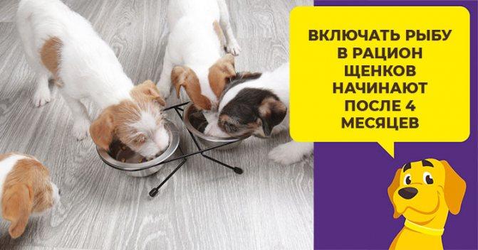 Полезно или вредно кормить собаку рыбой