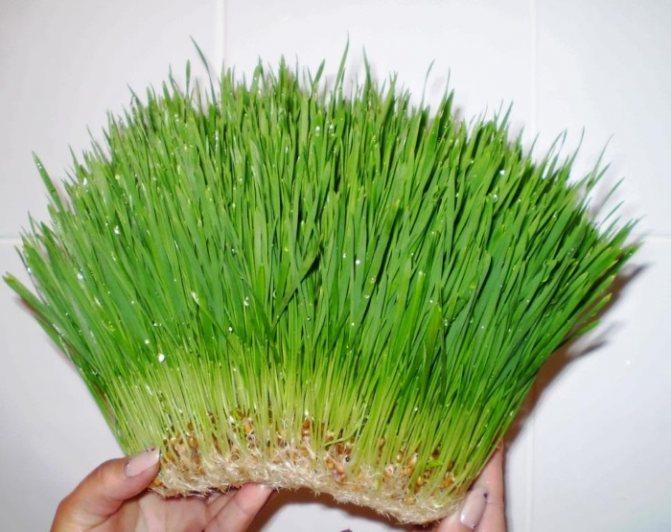 Полезные травы для собак
