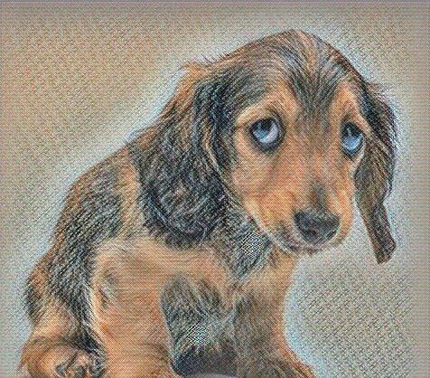 Политравма у собак