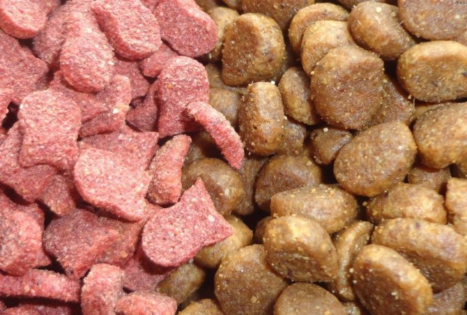 Полувлажный корм для собак