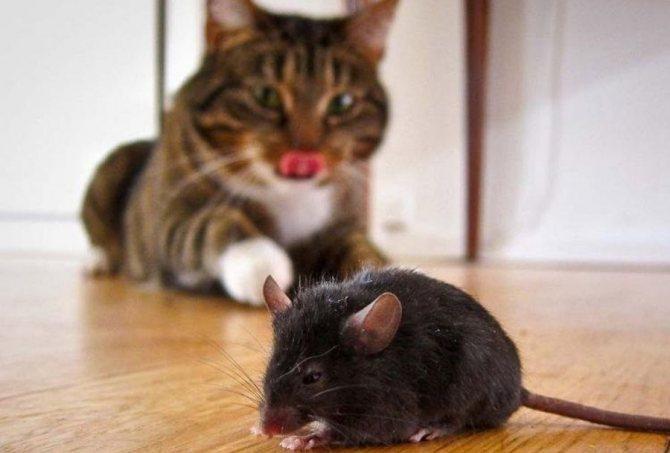 Польза от кошки для человека