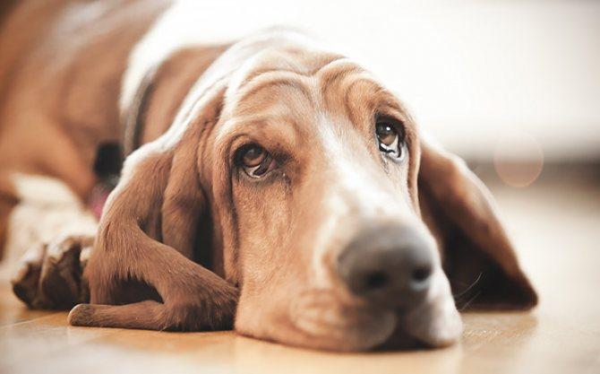 Помощь собаке при отравлении