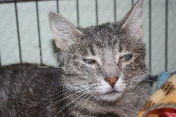 Помутнение глаз у кошек - как выглядит
