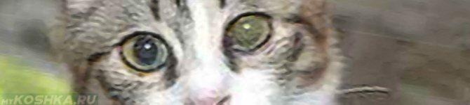 Помутнение помутнел глаз у кошки