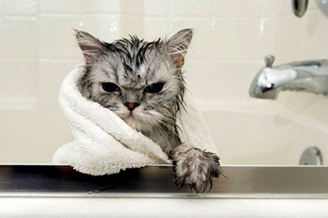 Помытый кот в полотенце