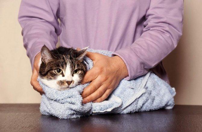 Пониженная температура у кошки причины и что делать