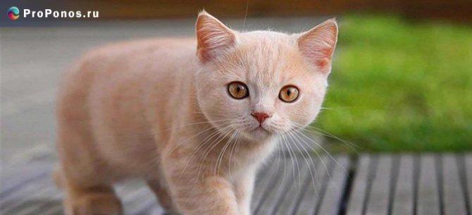 Понос с кровью у кошек