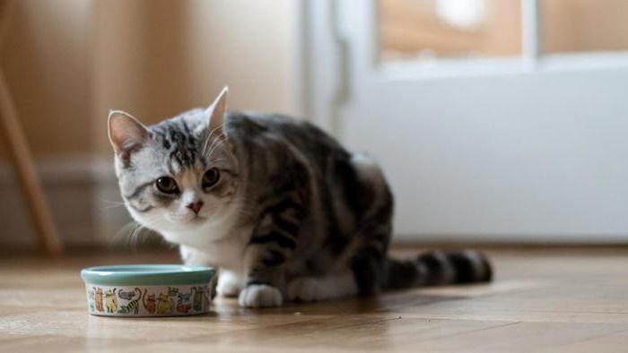 понос с кровью у кота лечение