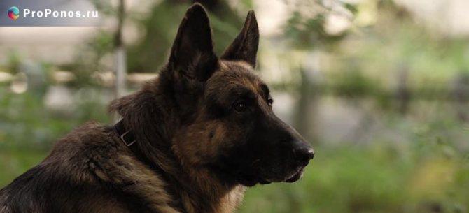Понос у собак