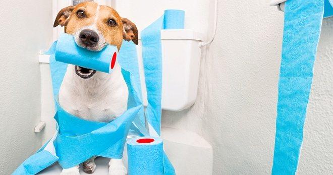 Понос у собаки - лечение, обзор популярных средств
