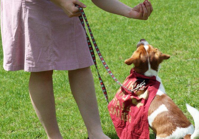 Поощряйте собаку лакомством
