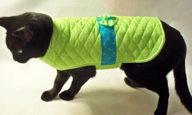Попона для кошек после операции: как сшить бандаж своими руками