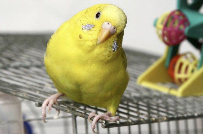 Попугай на клетке