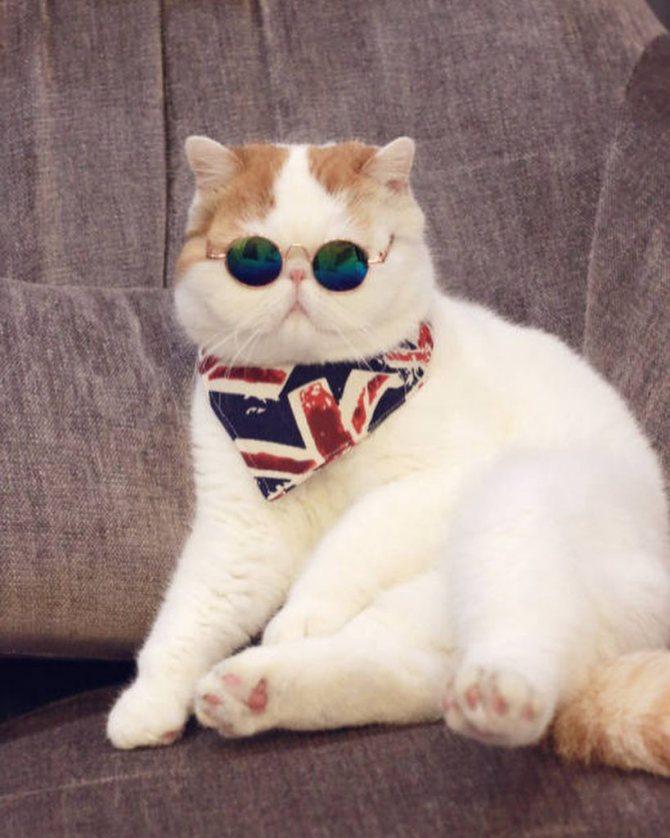 Популярный кот Снупи