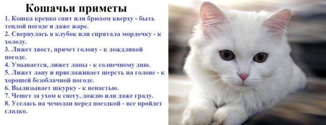 Порода кошек с разными глазами белые — белый кот в доме приметы