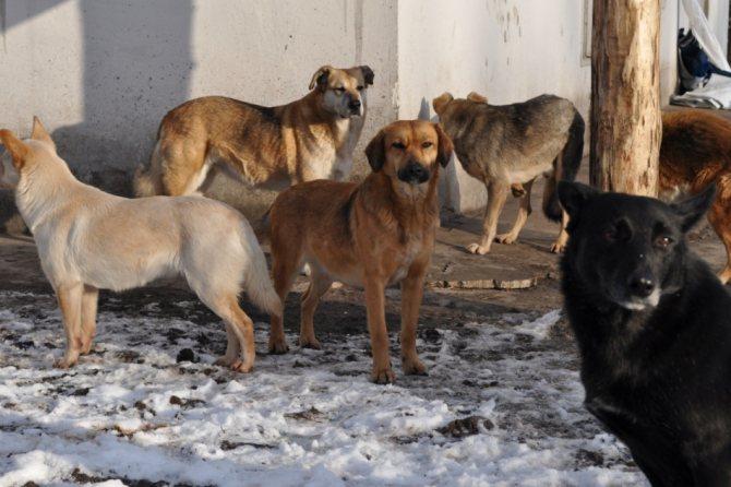 Породы собак для содержания на улице в будке: список