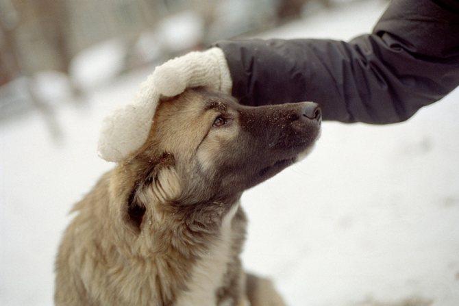 Породы собак для содержания в вольере: список
