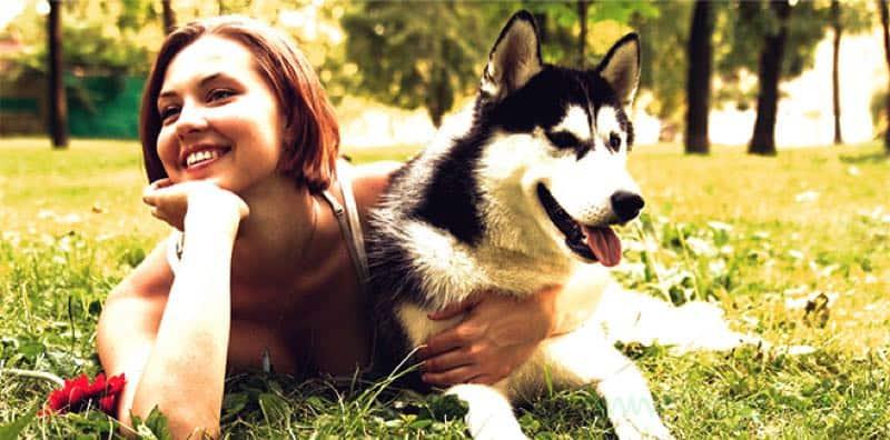Породы собак компаньонов, собаки компаньоны