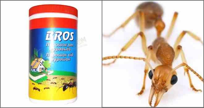 порошок от муравьев