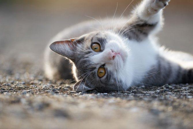 После падения коты могут вести себя по разному