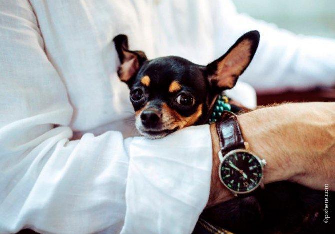 После прививки собаку нужно беречь от эмоциональных перегрузок