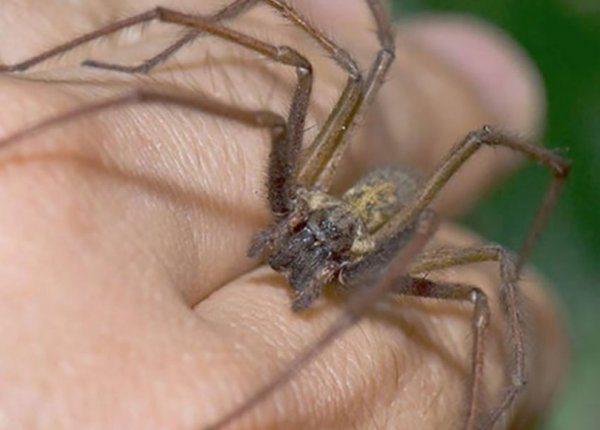 После укуса паука фото