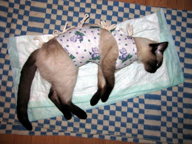 Послеоперационная попона для кошки