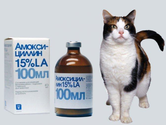 Амоксициллин для кота при мочекаменной болезни доза