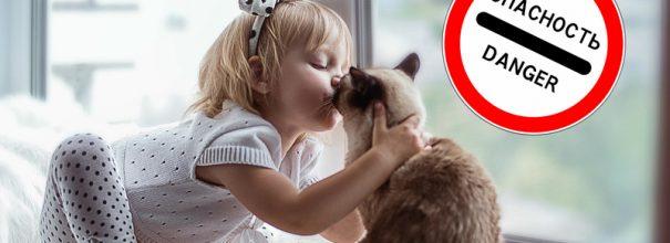 Кошки понимают когда их целуют