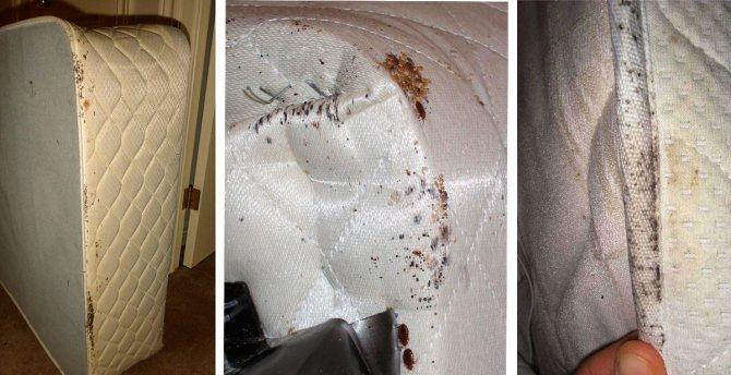 Постельные клопы в матрасе (фото) – как избавиться?
