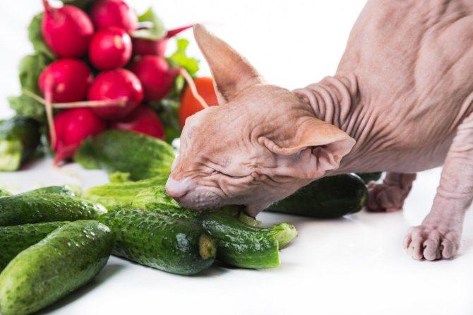 Потребность кошки в витаминах.