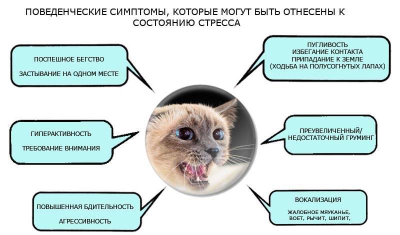 Поведенческие симптомы стресса у кошки